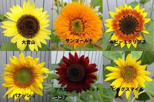 himawari6name