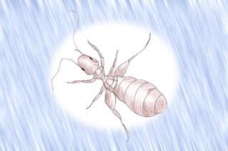 チャタテムシにはアレルギーの原因が どんな症状がでるの?